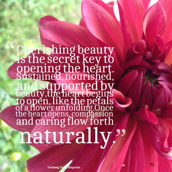 cherishing beauty